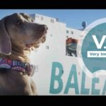 BALEÀRIA VIP – VERY IMPORTANT PET (AGENCIA PIECE OF CAKE)